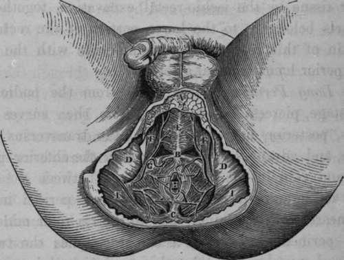 Perineal region anatomy