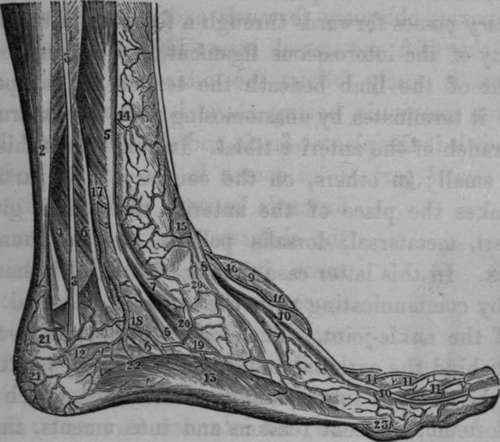 Ligature Of The Peroneal Artery