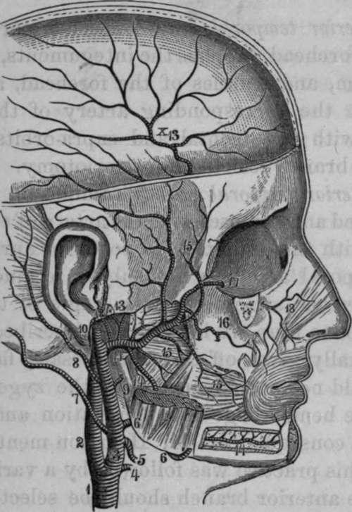 The Internal Maxillary Artery