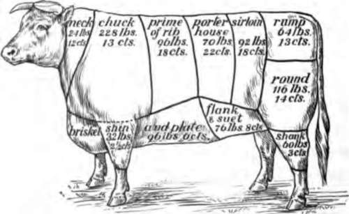 Beef Cut Anatomy of Various Cuts of Beef