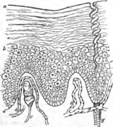 slant of staphyloccocus epidermis