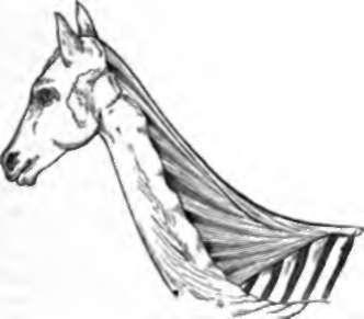 20. Peculiarities Of The Human Skeleton