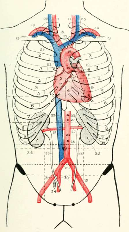 The Valves Of The Heart
