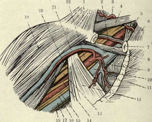 The Elbow Surface Anatomy