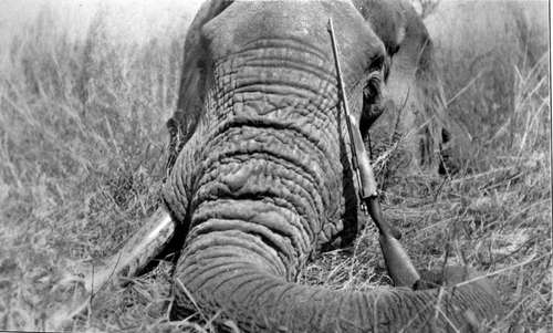"""conflict in shooting an elephant Literary analysis of """"shooting an elephant,"""" by george orwell  the internal conflict between his personal morals, and his duty to his country."""