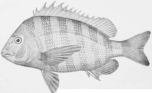 Bass fishing in winter for Bass fishing in winter